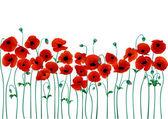depositphotos_2264550-Red-poppies